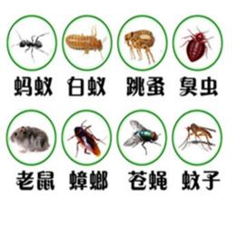 南昌专业除四害公司 病虫害防治 优质服务缩略图