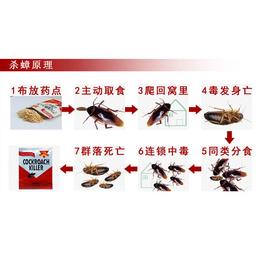 贵港蟑螂消杀哪家强- 康程有害生物防治-办公楼蟑螂消杀哪家强