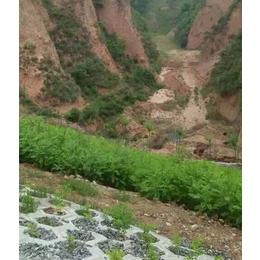 鹤壁紫穗槐小苗-紫穗槐小苗价格-合绿家庭农场(推荐商家)
